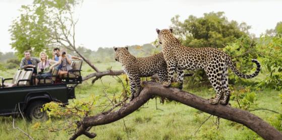 Taman Nasional Kruger merupakan objek wisata yang menjadi primadona di benua afrika yang berisi